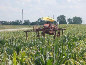Male Corn Cutting Close UP